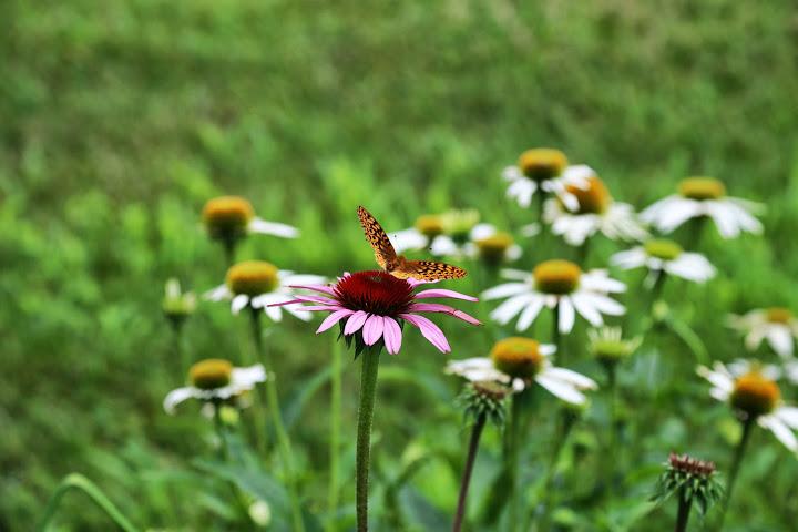 juup van werkhoven Romeijn vlinder